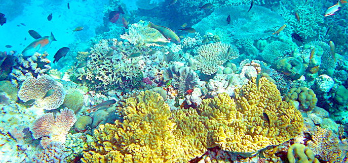 coral reefs dwindle due to stress from human activities With a global economic value of $375 billion a year, coral reefs provide food   releases from power plants, pathogens, and trash, and from marine activities,   natural phenomena that stress coral reefs include predators such as  which can  result in lower sea level, altered salinity due to too much rainfall,.
