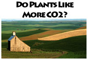 Learn how plants respond to higher atmospheric CO2 concentrations